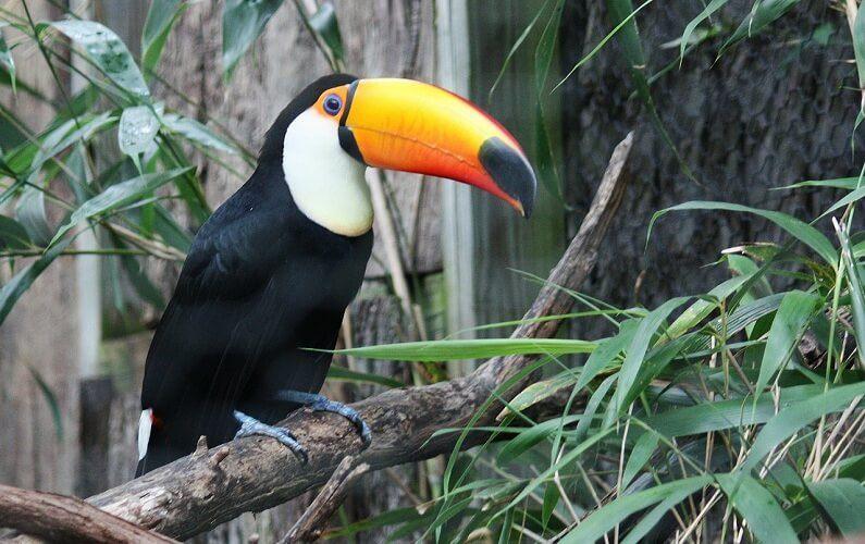 bhilai zoo
